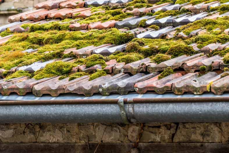 couvreur lisieux, nettoyage toits